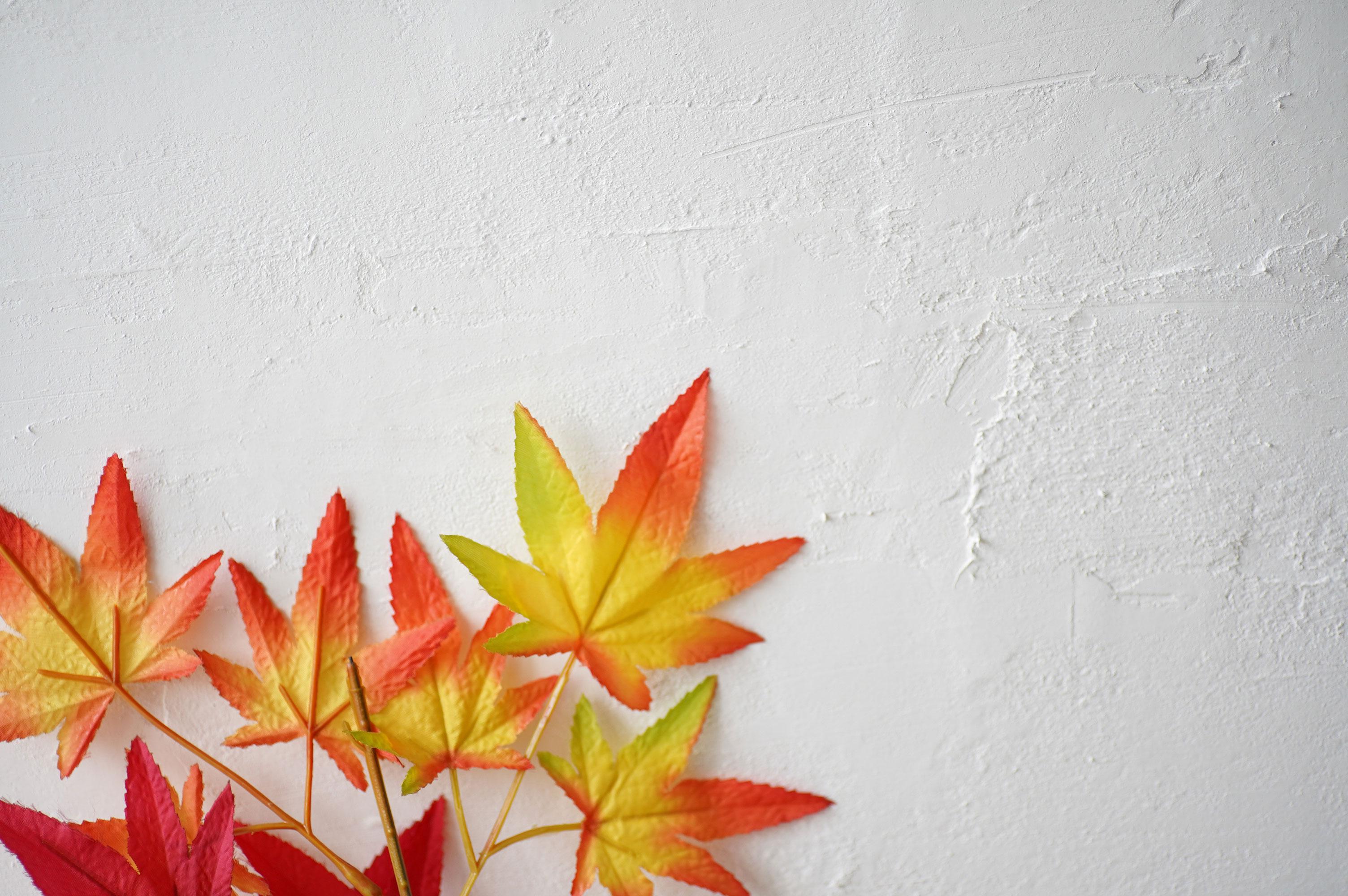 漆喰の壁と紅葉
